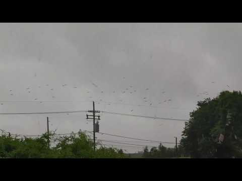 Tropical Storm Cindy - Frigate Birds - Algiers Point (NOLA)