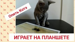 Кот играетприколы живонтые порода корниш рекс
