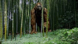 The Biggest Monkey Of The Planet