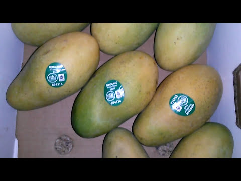 100% Organic Mango Francique from Haiti to USA