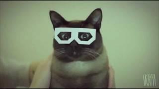 Dubstep Hipster Cat Remix V.I.P By RoyalMiner97