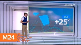 Климат контроль когда в столицу придет прохлада   Москва 24