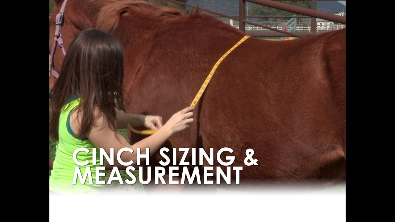 How To Measure For A Horse U0026 39 S Cinch Size Without A Saddle