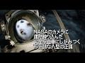 NASAのカメラに偶然映り込んだ火星探査車にしがみつく不気味な人型の正体 human figure clinging to Mars probe that appears in NASA camera