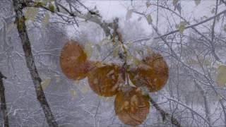 А снег идет....