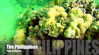 Дайвинг Филиппины Пуэрто-Галера