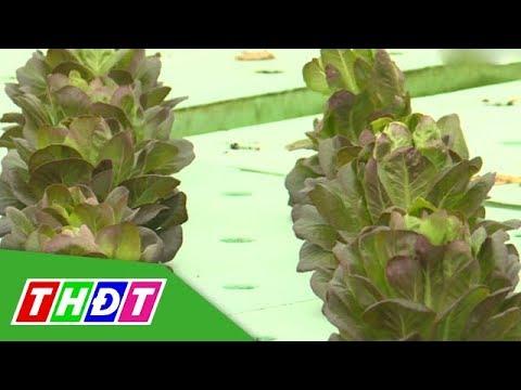 Khởi nghiệp nông nghiệp công nghệ cao với Aquaponics   THDT