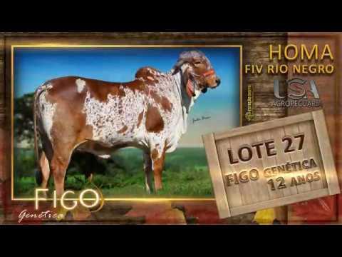 LOTE 27 - HOMA FIV RIO NEGRO - PDJG 119