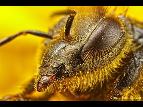 Toxic Foraging, Pro bee iotics & Struggle For Commercial Beekeepers