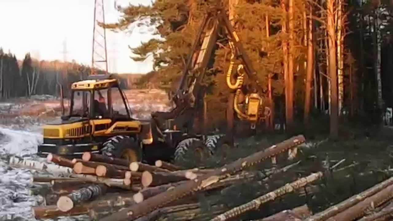 Картинки по запросу рубки леса