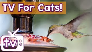 Cat TV - The BEST Calming Videos for Cats, Music and Birds in HD - Relaxing Music and Natu ...