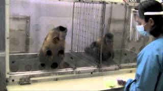 AibraoarT Two Monkeys Were Paid Unequally Excerpt From