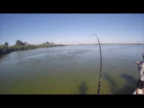 Late December Docks And Flats Fishing Tampa Bay