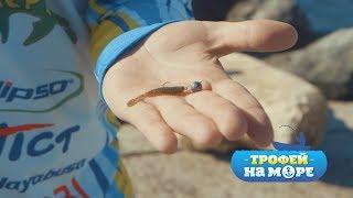 Трофей на море. 22 серия. Спортивная ловля рыбы