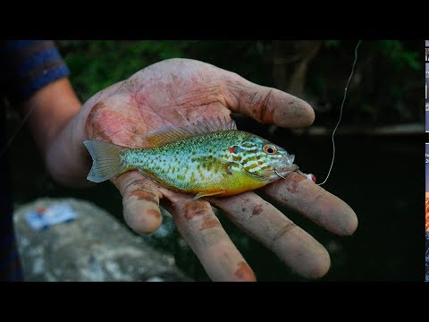 Multi-Species Creek Fishing!