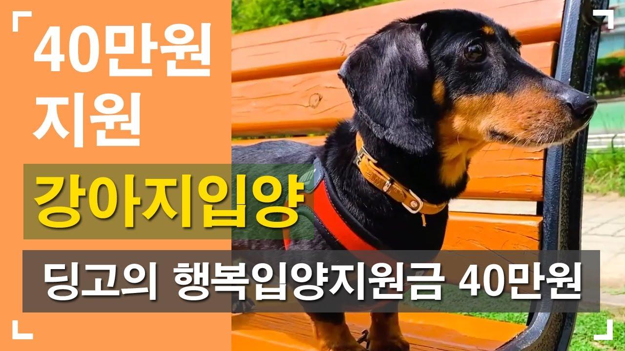 """강아지입양 닥스훈트 """"딩고"""" 지원금 40만원! 아가펫보호소!"""