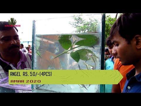 CHEAPEST AQUARIUM FISH SELLER । GALIFF STREET PET MARKET KOLKATA INDIA   7TH JULY 2019 VISIT PART2