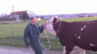 Dressage d'une vache - LEGTA La Côte Saint André