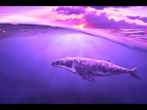 Deep Healing Miracle Tone 528Hz | Let Go & Feel Good | Enhance Self Love | Enhance Positive Energy