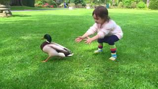 🌸El Pollito Pio / Jugando en el Parque / Little Chick