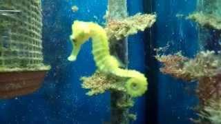 Besuch: Aquarien Fische Korallen Duisburg Zoo Zajac 2015 HD