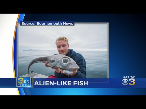 Fisherman Shocked After Reeling In Alien-Like Fish