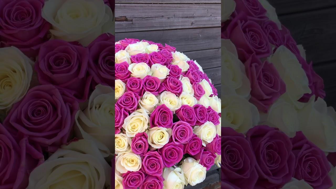101 розовая и белая роза 50 см