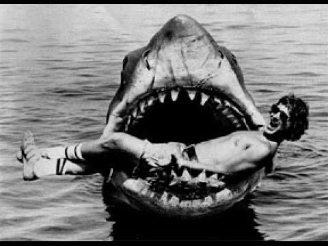 Как избежать встречи с акулой. Практические советы