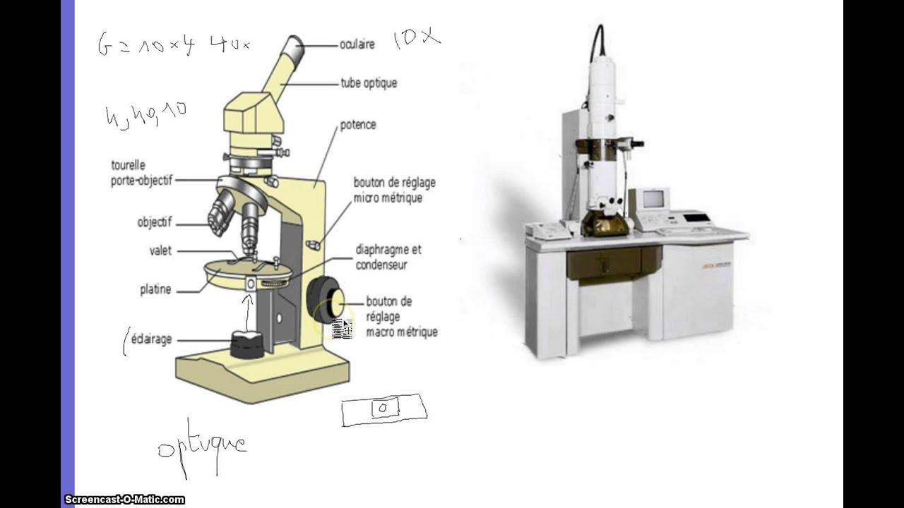 difference entre microscope optique et electronique