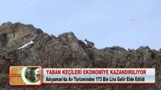YABAN KEÇİLERİ EKONOMİYE KAZANDIRILIYOR 28.03.2012