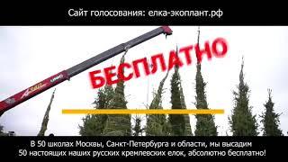 Голосуем за ГБОУ №509 г. Санкт-Петербург - Операция Ёлка в Школу / елка-экоплант.рф