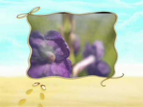 Nokia N8 video editor photo slide sample by my4keys