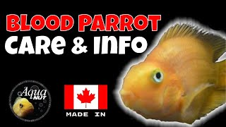 Blood Parrot Cichlid Care 🐟 How To Care for Blood Red Parrot Fish