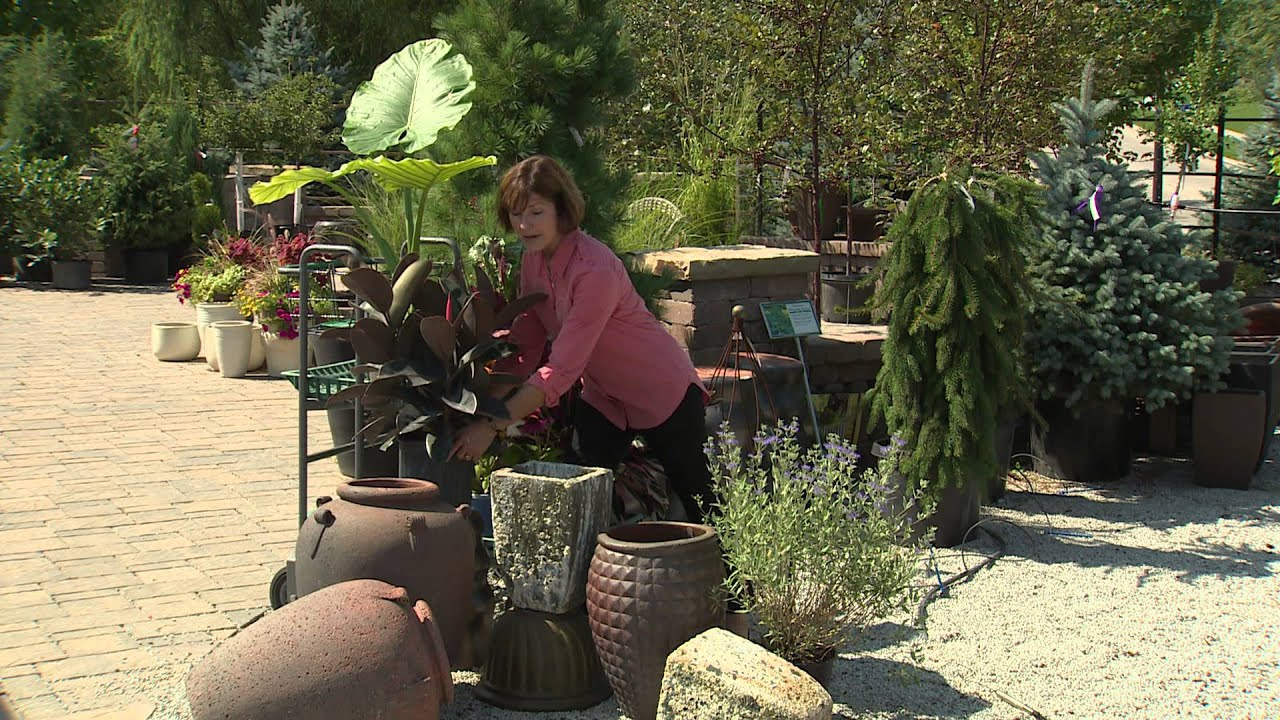 backyard farmer: lifestyle gardening season 2-3 - youtube