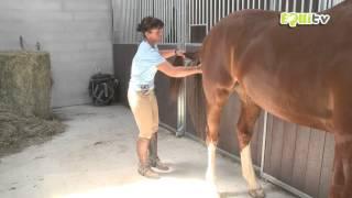 Les secrets pour que votre cheval soit le plus beau en concours !