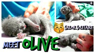 Russian Blue Kitten Rescue - Baby Olive
