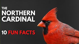 10 Fun & Interesting Facts About Northern Cardinals
