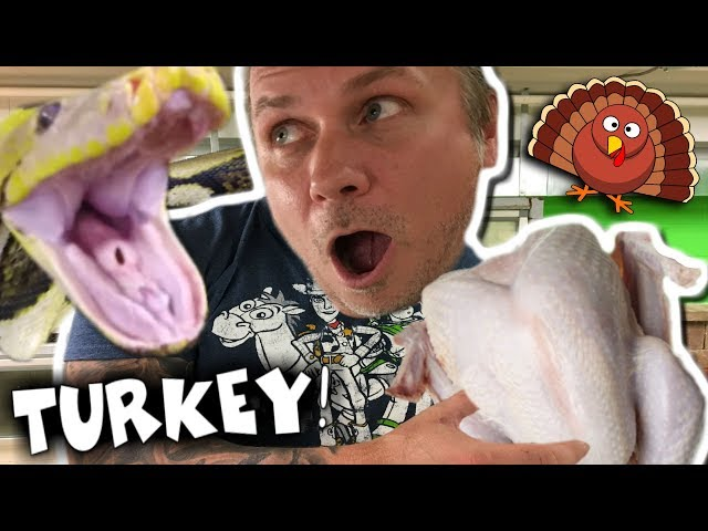 FED MY HUGE SNAKE A TURKEY FOR THANKSGIVING!!! Brian Barczyk