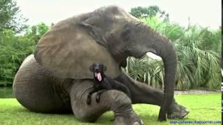 ДРУЖБА это ЧУДО  смешные и прикольные видео про дружбу животных