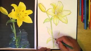 Как рисовать лилию. Часть 2. Урок 29(Сайт: http://www.peleshko.com.ua., 2013-09-14T19:15:23.000Z)