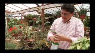 cómo eliminar hongos en plantas
