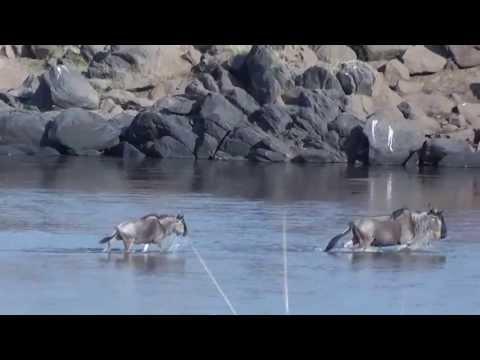 Massai Mara Wildebeest Migration - EM Ops team
