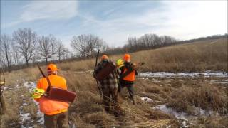 Archery Pheasant Hunt, w/ Greg, Randall, Christopher, Zachary and Frank