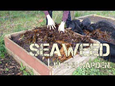 How & Why I Use Seaweed in the Garden