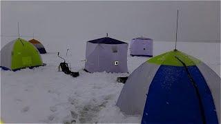 Зимняя рыбалка 2020. Ловим корюшку, карпа, карася.