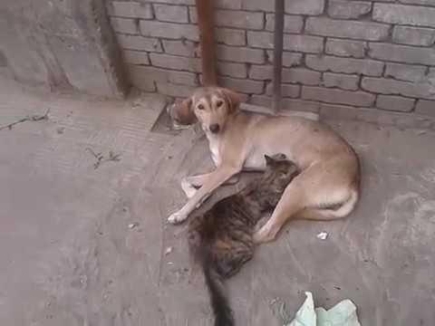 قطة-ترضع-من-على-كلبة-في-مشهد-غريب-عجيب-سبحان-الله