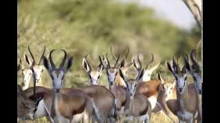Dzika Afryka ZDJĘCIA Namibia 2014 Zbigniew J. Boczek