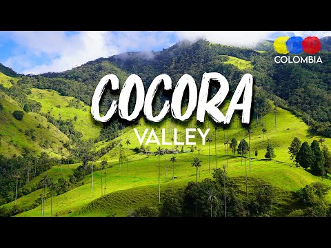 COCORA VALLEY – Colombia's national tree | Salento (2018)