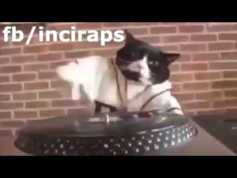 Dj-Kedi müzik çalıyor