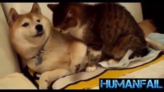اضحك مع القطط ضد الكلاب